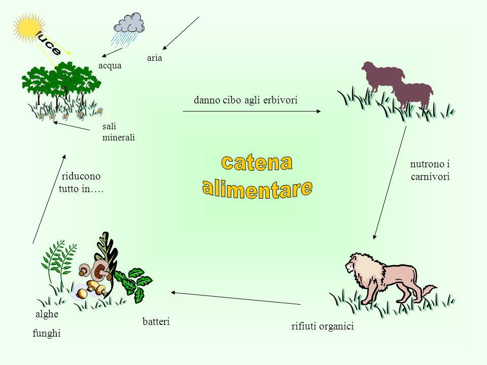 danno cibo agli erbivori