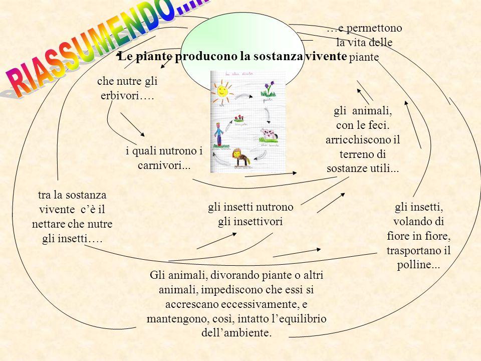 Le piante producono la sostanza vivente