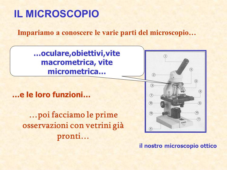 IL MICROSCOPIO Impariamo a conoscere le varie parti del microscopio… …oculare,obiettivi,vite macrometrica, vite micrometrica…