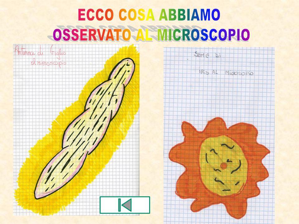 OSSERVATO AL MICROSCOPIO