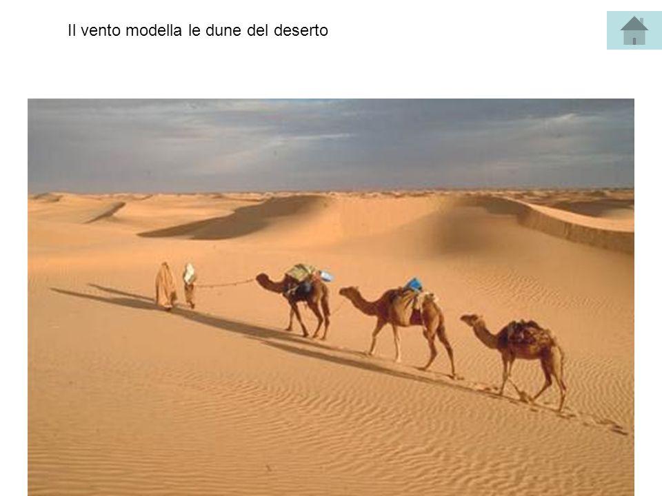 Il vento modella le dune del deserto