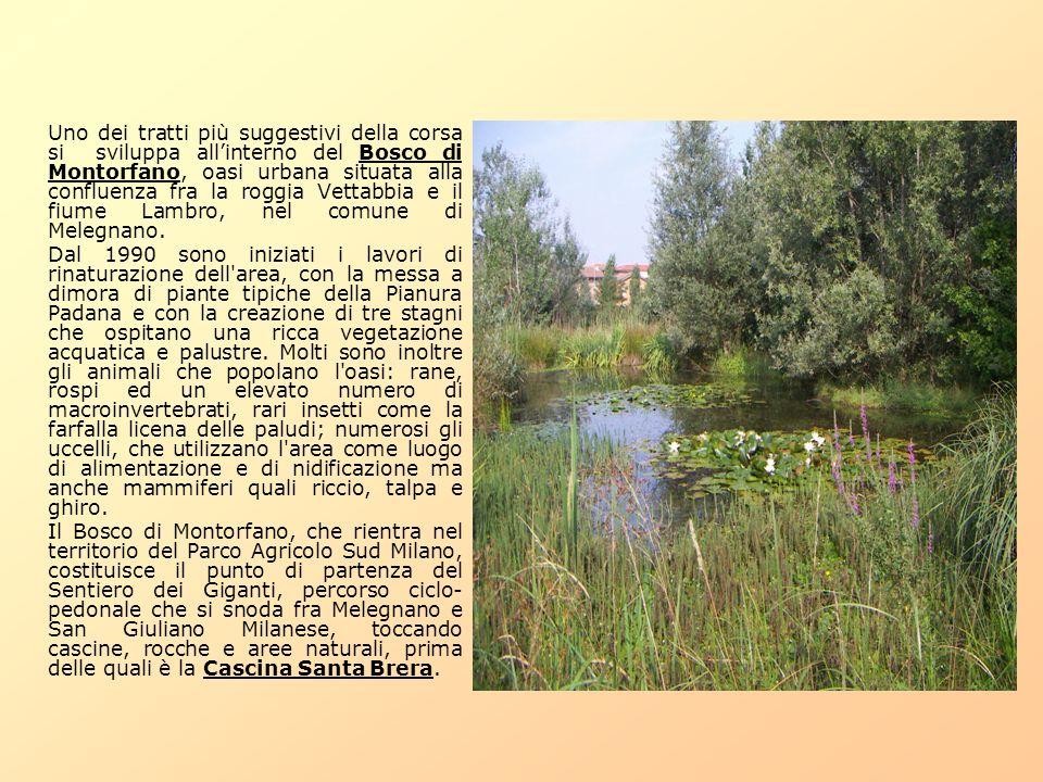 Uno dei tratti più suggestivi della corsa si sviluppa all'interno del Bosco di Montorfano, oasi urbana situata alla confluenza fra la roggia Vettabbia e il fiume Lambro, nel comune di Melegnano.