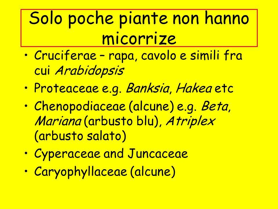 Solo poche piante non hanno micorrize