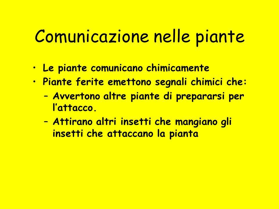Comunicazione nelle piante