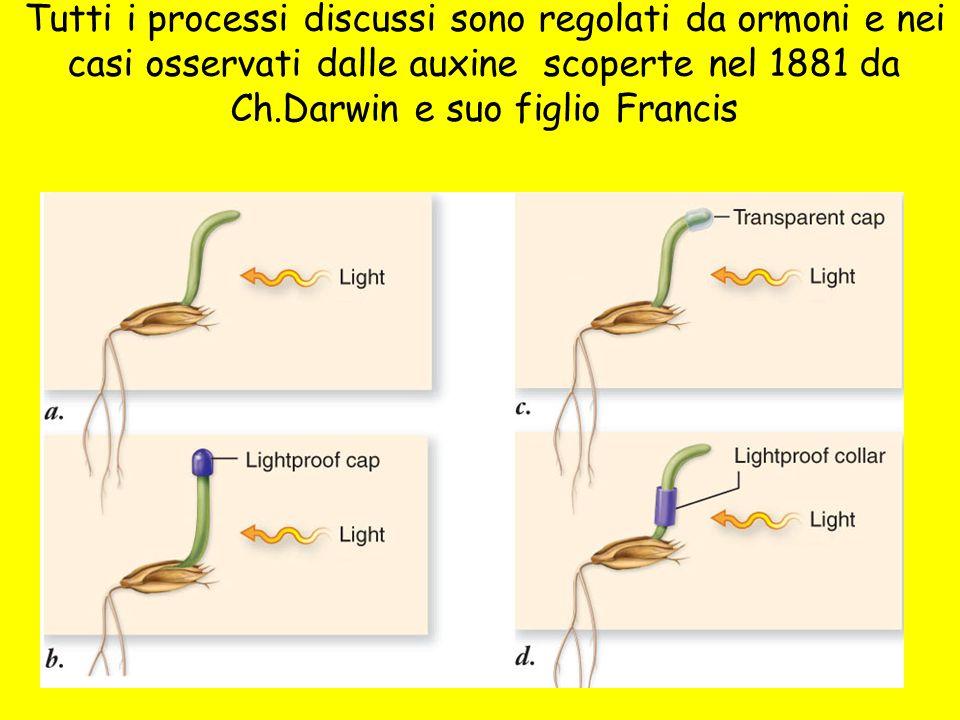 Tutti i processi discussi sono regolati da ormoni e nei casi osservati dalle auxine scoperte nel 1881 da Ch.Darwin e suo figlio Francis