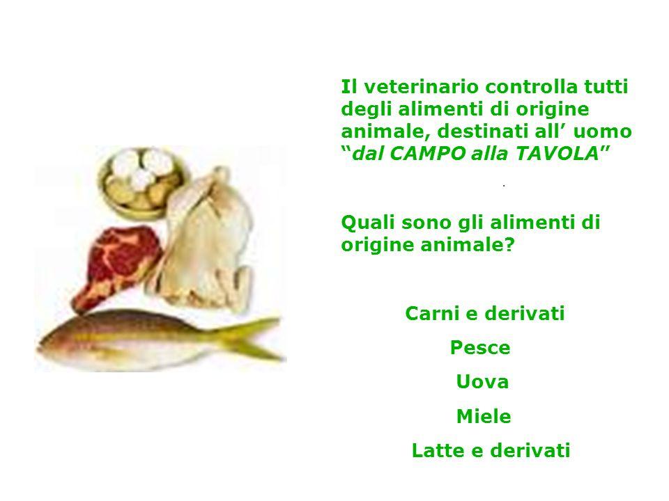 Quali sono gli alimenti di origine animale