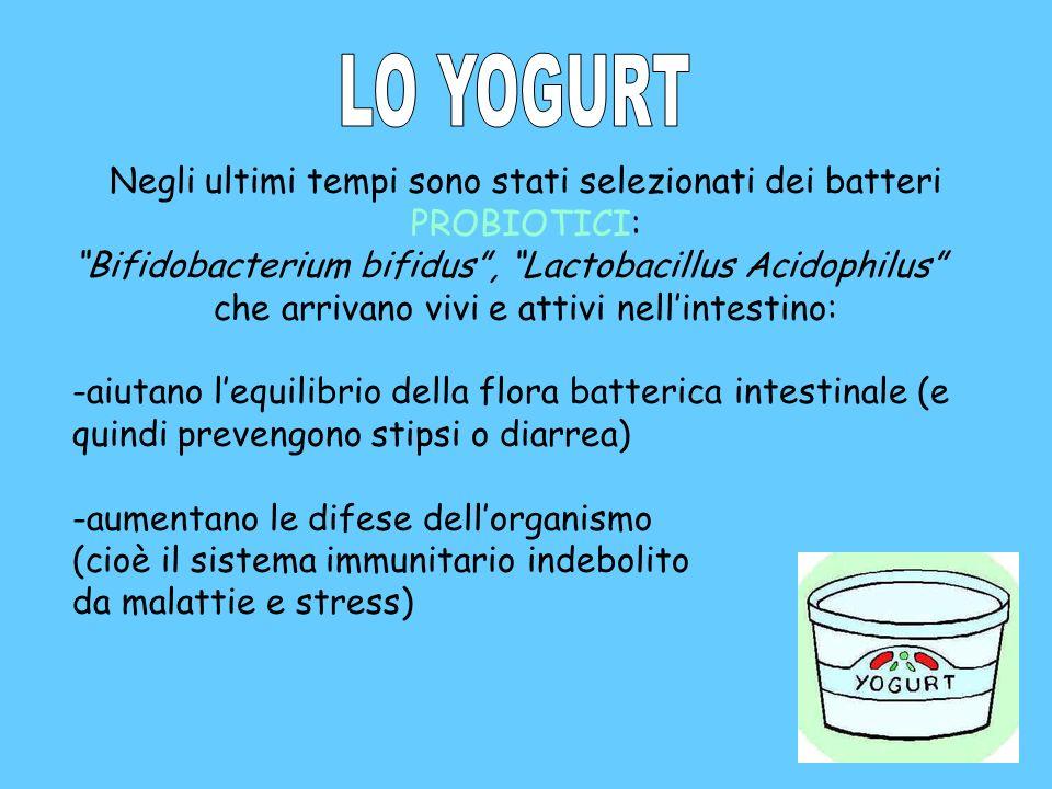 LO YOGURT Negli ultimi tempi sono stati selezionati dei batteri PROBIOTICI: Bifidobacterium bifidus , Lactobacillus Acidophilus