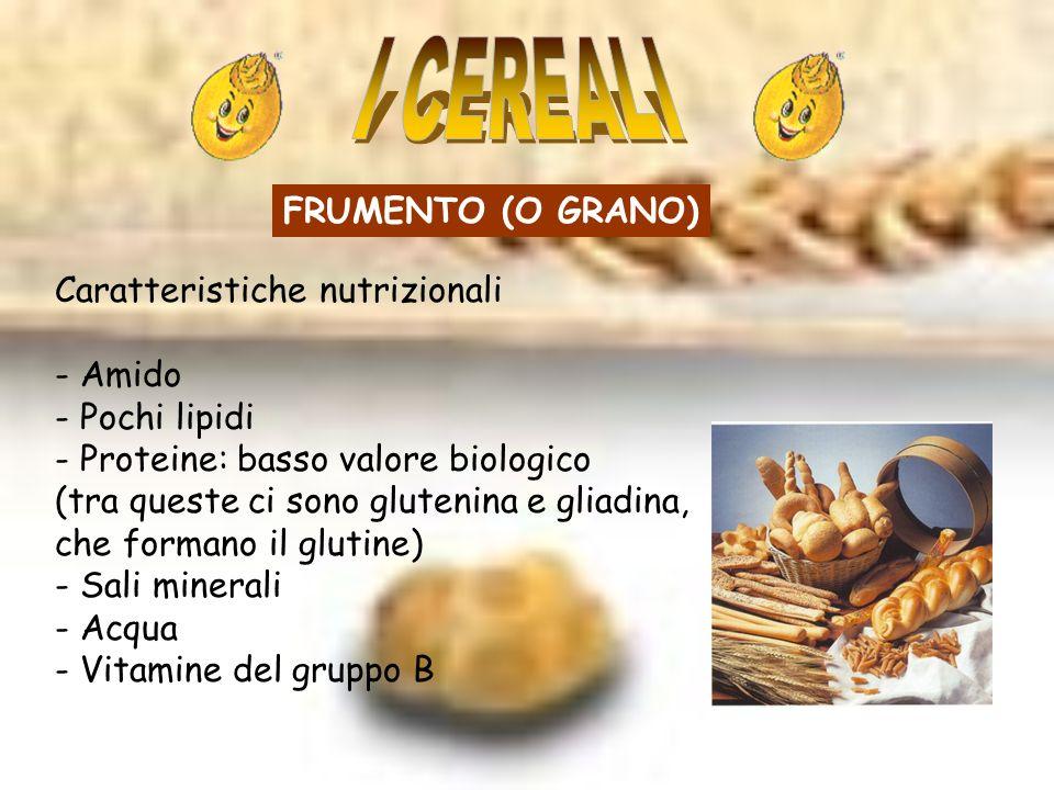 I CEREALI FRUMENTO (O GRANO) Caratteristiche nutrizionali - Amido