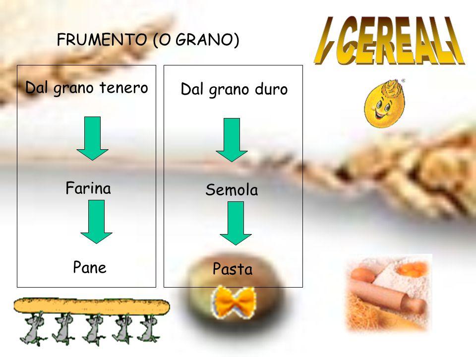 I CEREALI FRUMENTO (O GRANO) Dal grano tenero Dal grano duro Farina