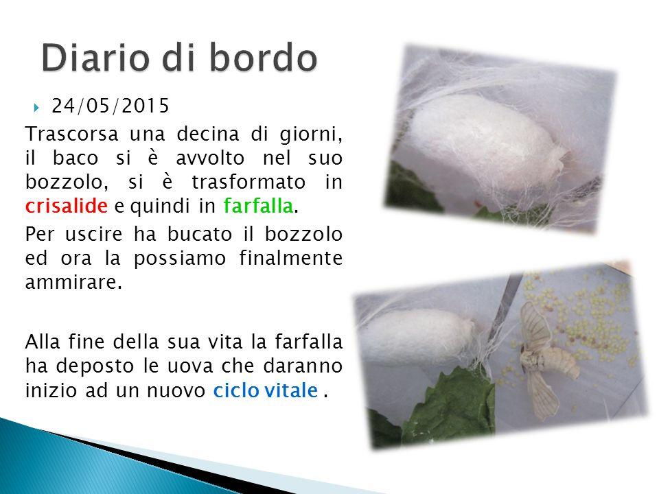 Diario di bordo 24/05/2015.