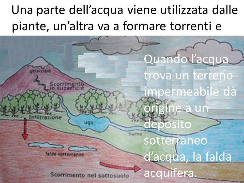 Una parte dell'acqua viene utilizzata dalle piante, un'altra va a formare torrenti e fiumi, un'altra penetra nel terreno.