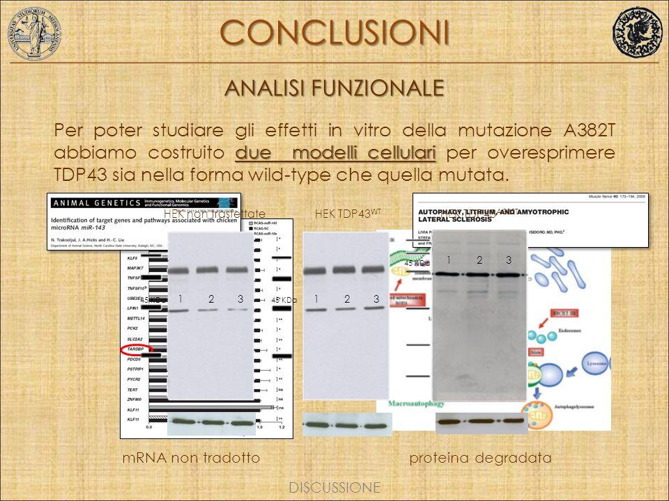 CONCLUSIONI ANALISI FUNZIONALE