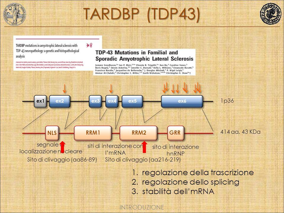 TARDBP (TDP43) regolazione della trascrizione