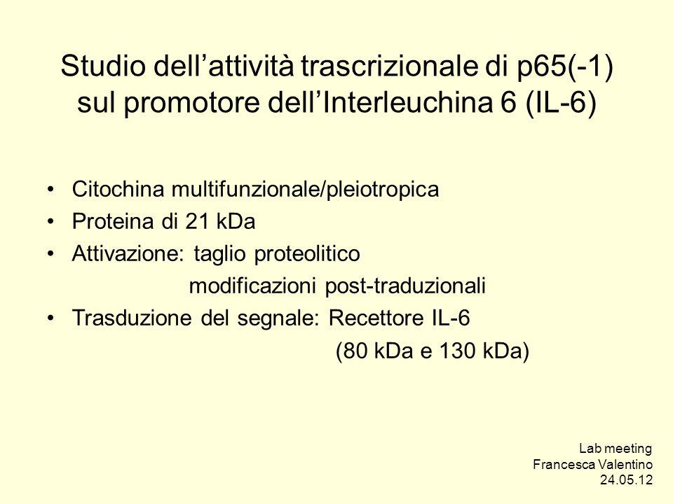 Studio dell'attività trascrizionale di p65(-1) sul promotore dell'Interleuchina 6 (IL-6)