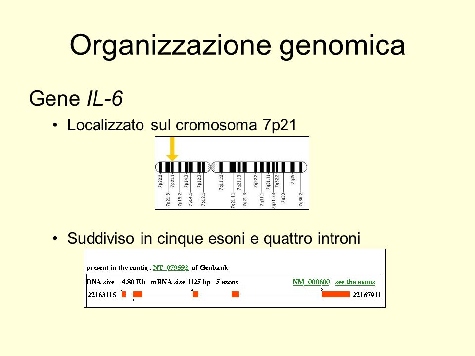 Organizzazione genomica