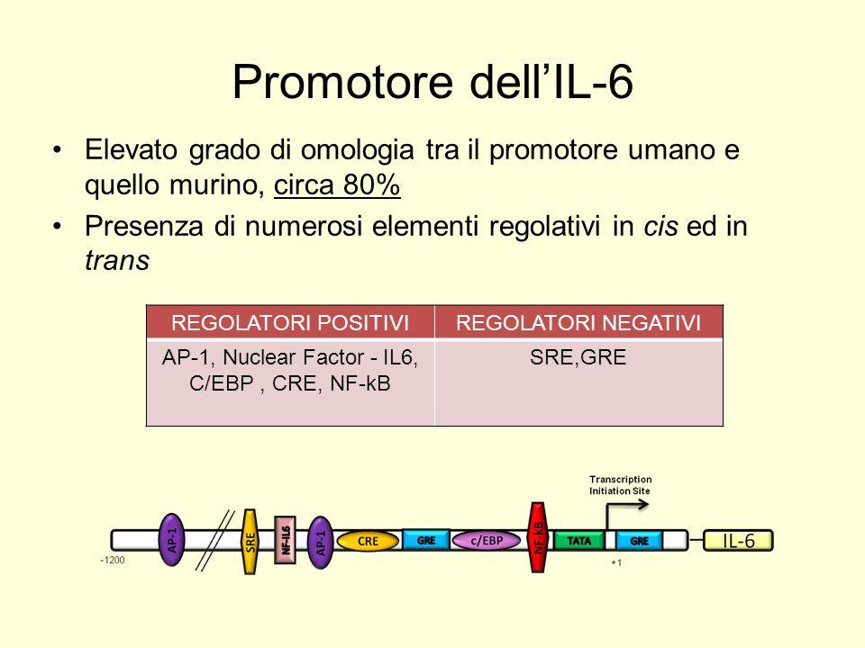 AP-1, Nuclear Factor - IL6, C/EBP , CRE, NF-kB