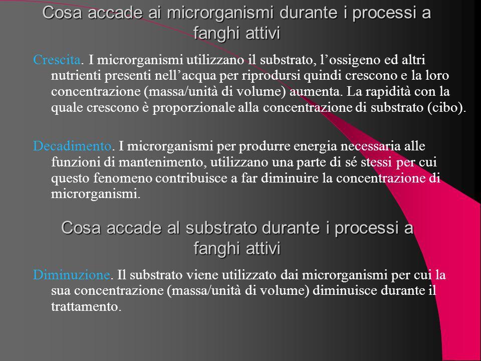 Cosa accade ai microrganismi durante i processi a fanghi attivi