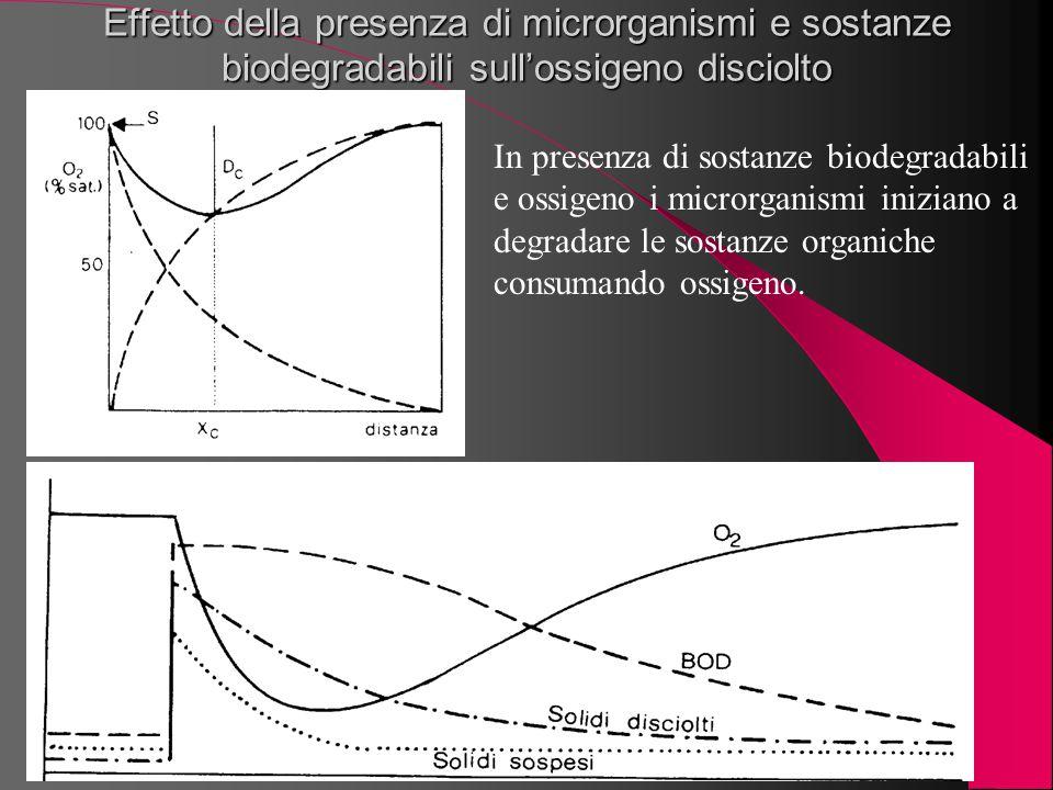 Effetto della presenza di microrganismi e sostanze biodegradabili sull'ossigeno disciolto
