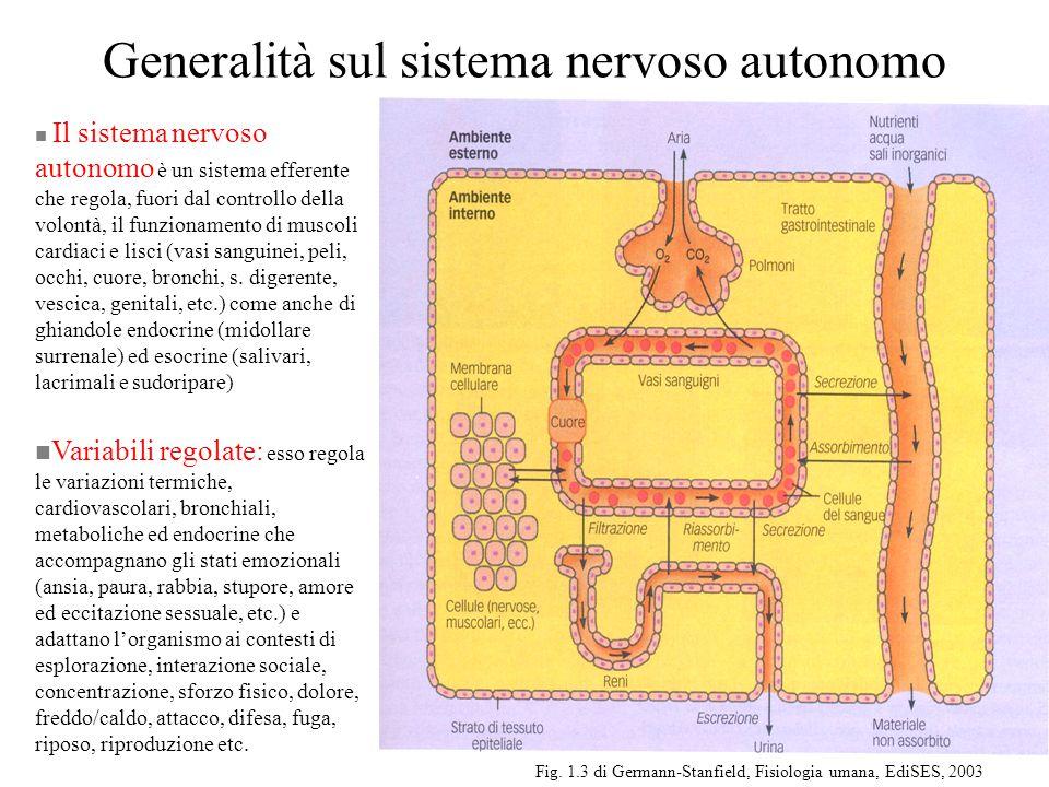 Generalità sul sistema nervoso autonomo