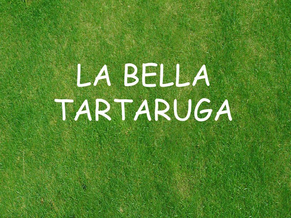 LA BELLA TARTARUGA