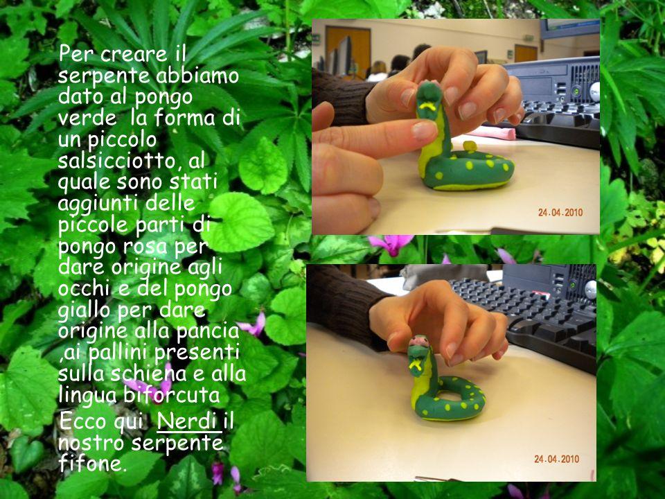 Per creare il serpente abbiamo dato al pongo verde la forma di un piccolo salsicciotto, al quale sono stati aggiunti delle piccole parti di pongo rosa per dare origine agli occhi e del pongo giallo per dare origine alla pancia ,ai pallini presenti sulla schiena e alla lingua biforcuta