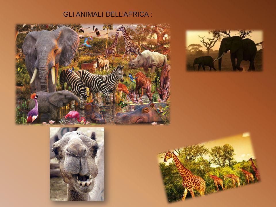 GLI ANIMALI DELL'AFRICA :