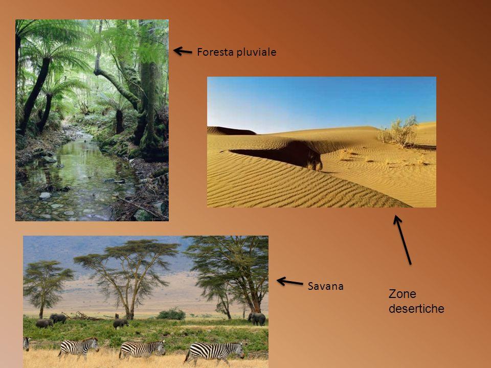Foresta pluviale Savana Zone desertiche