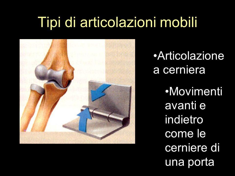 Tipi di articolazioni mobili