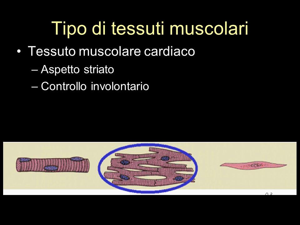 Tipo di tessuti muscolari
