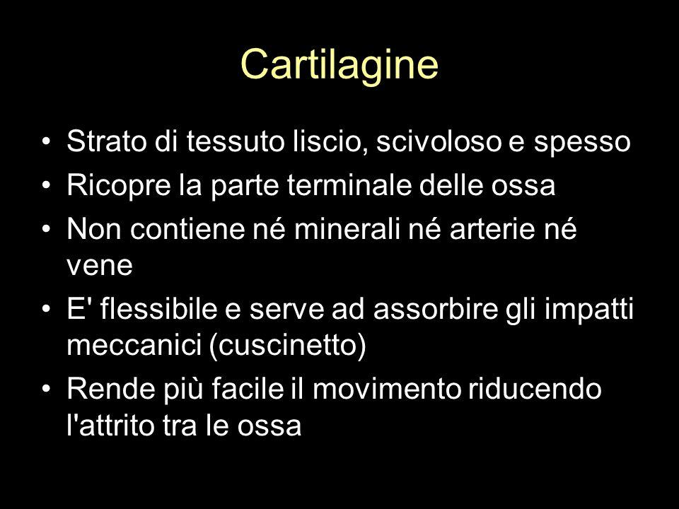 Cartilagine Strato di tessuto liscio, scivoloso e spesso