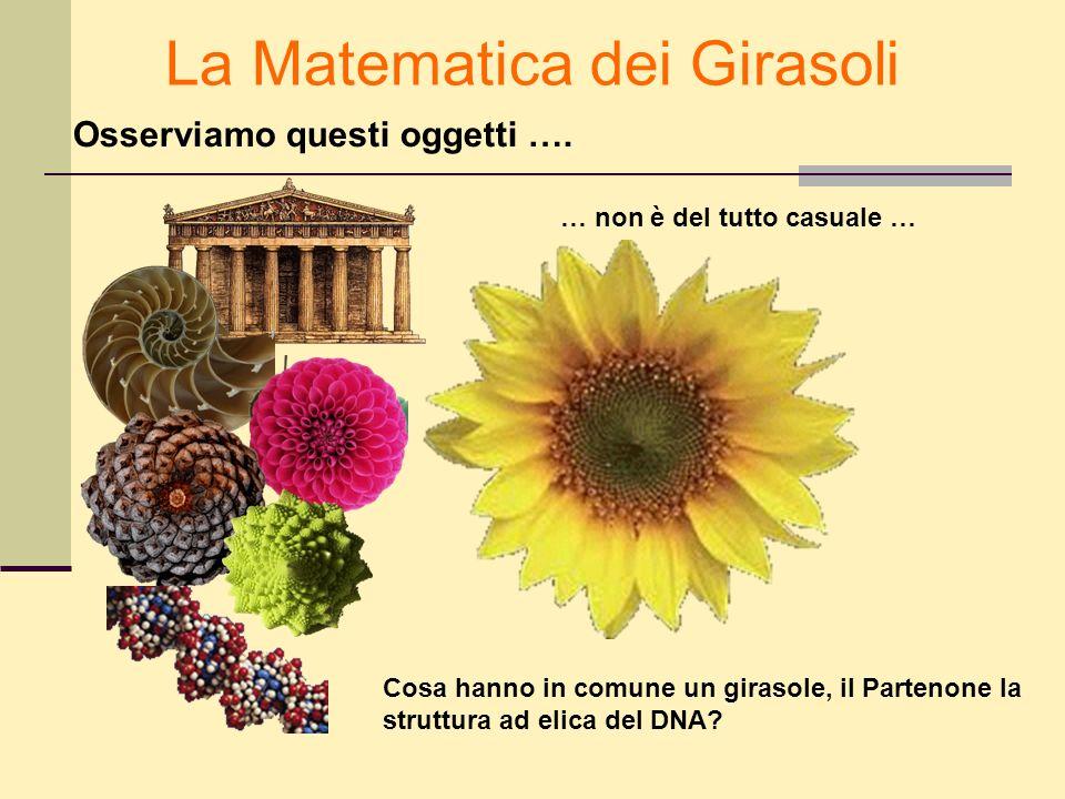La Matematica dei Girasoli