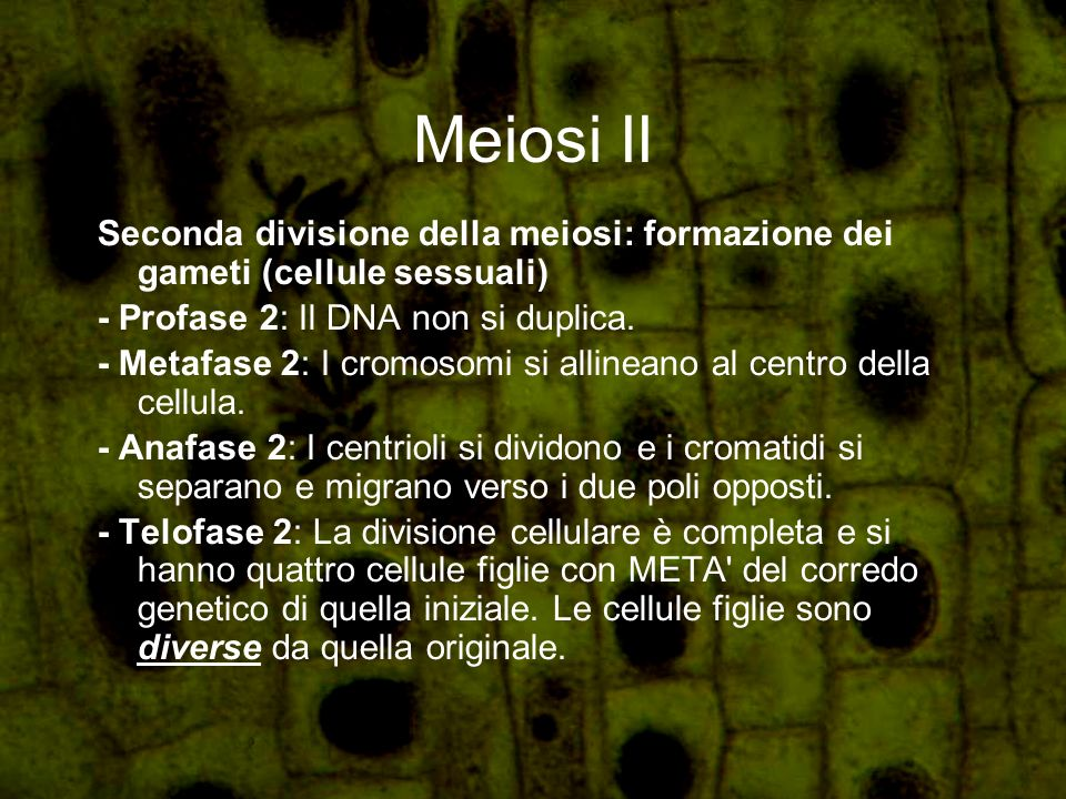 Meiosi II Seconda divisione della meiosi: formazione dei gameti (cellule sessuali) - Profase 2: Il DNA non si duplica.