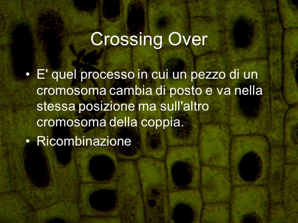 Crossing Over E quel processo in cui un pezzo di un cromosoma cambia di posto e va nella stessa posizione ma sull altro cromosoma della coppia.