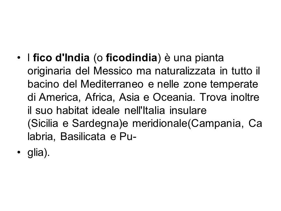 l fico d India (o ficodindia) è una pianta originaria del Messico ma naturalizzata in tutto il bacino del Mediterraneo e nelle zone temperate di America, Africa, Asia e Oceania. Trova inoltre il suo habitat ideale nell Italia insulare (Sicilia e Sardegna)e meridionale(Campania, Calabria, Basilicata e Pu-