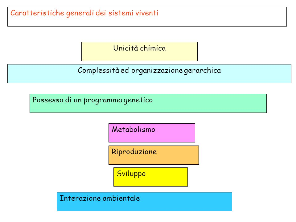 Complessità ed organizzazione gerarchica