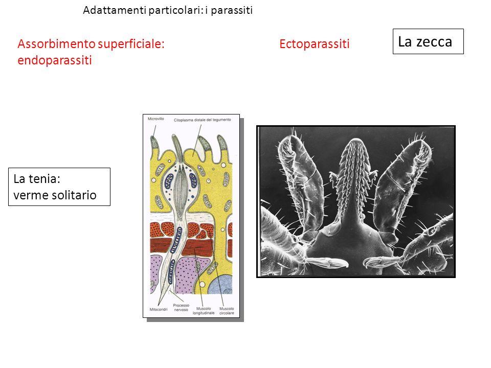 La zecca Assorbimento superficiale: endoparassiti Ectoparassiti