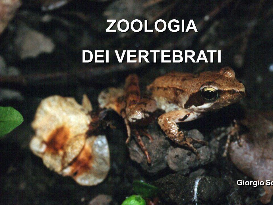 ZOOLOGIA DEI VERTEBRATI Giorgio Scarì