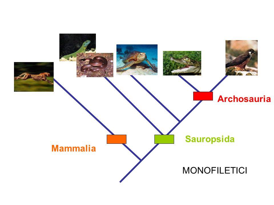 Archosauria Sauropsida Mammalia MONOFILETICI