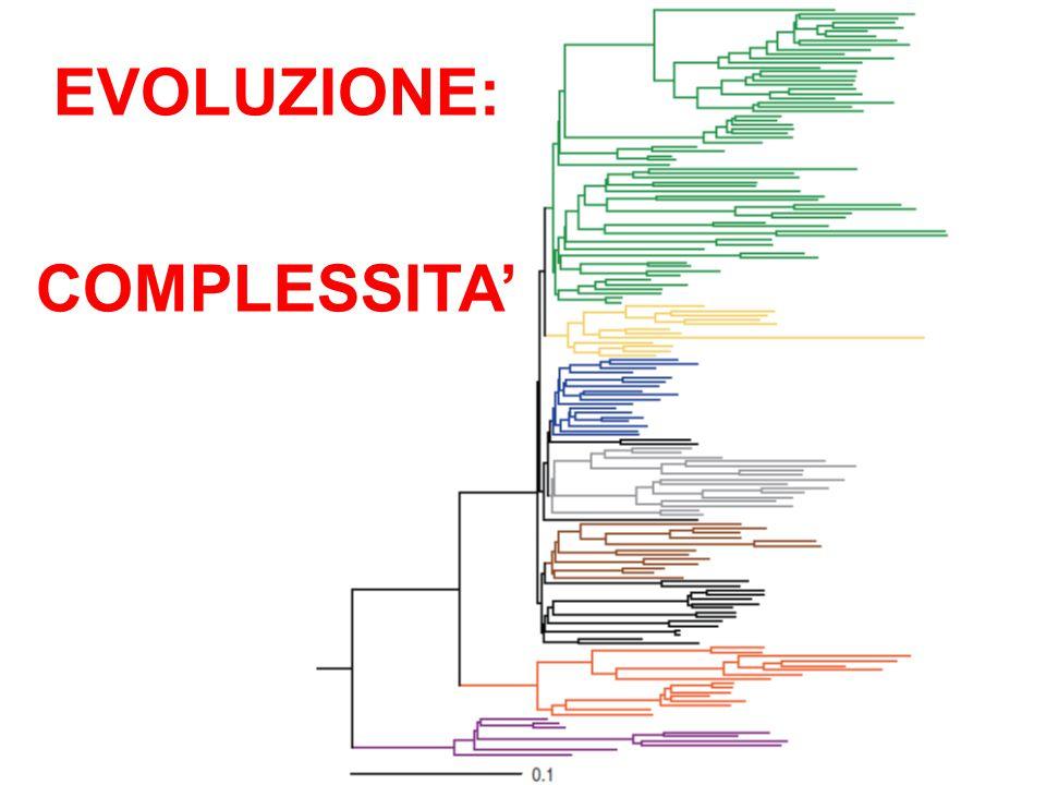EVOLUZIONE: COMPLESSITA'