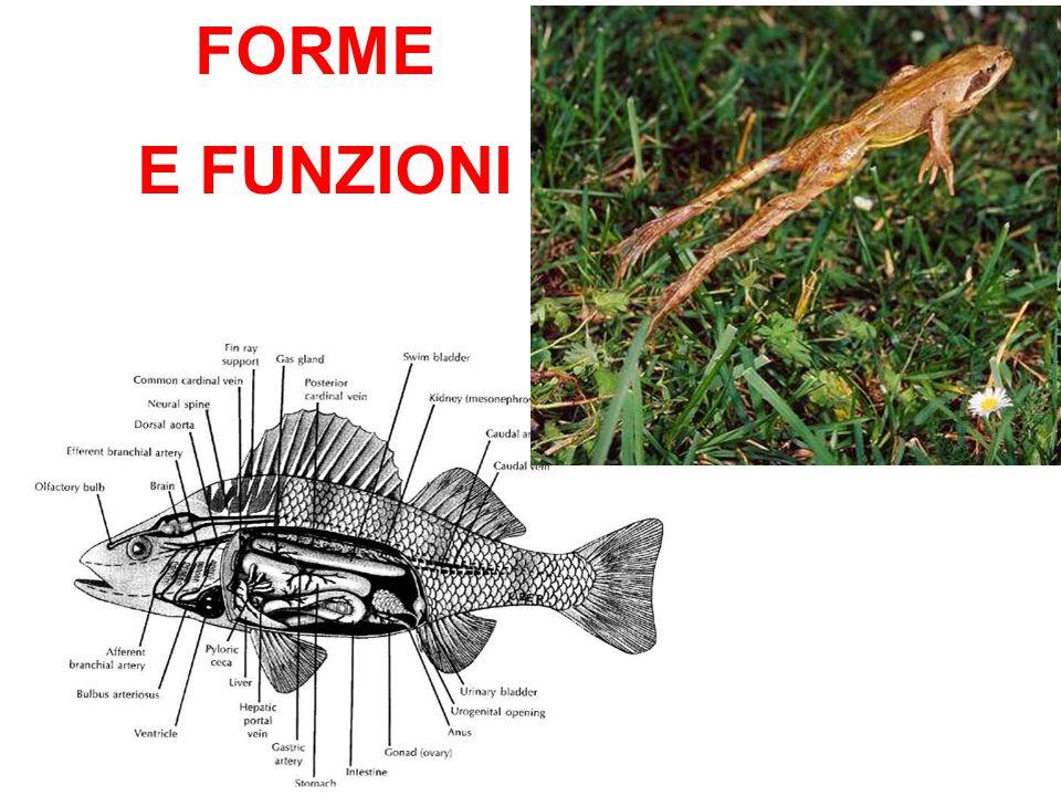FORME E FUNZIONI