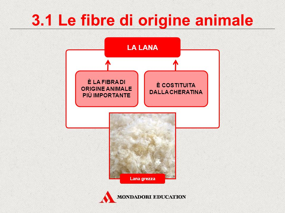 3.1 Le fibre di origine animale