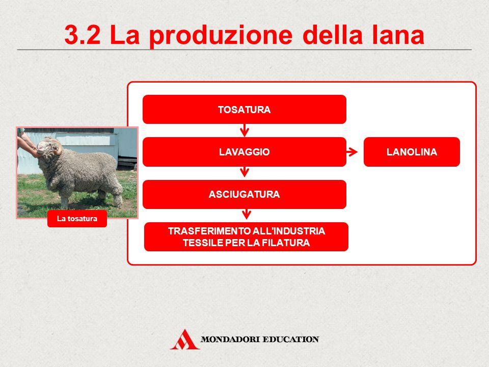 3.2 La produzione della lana