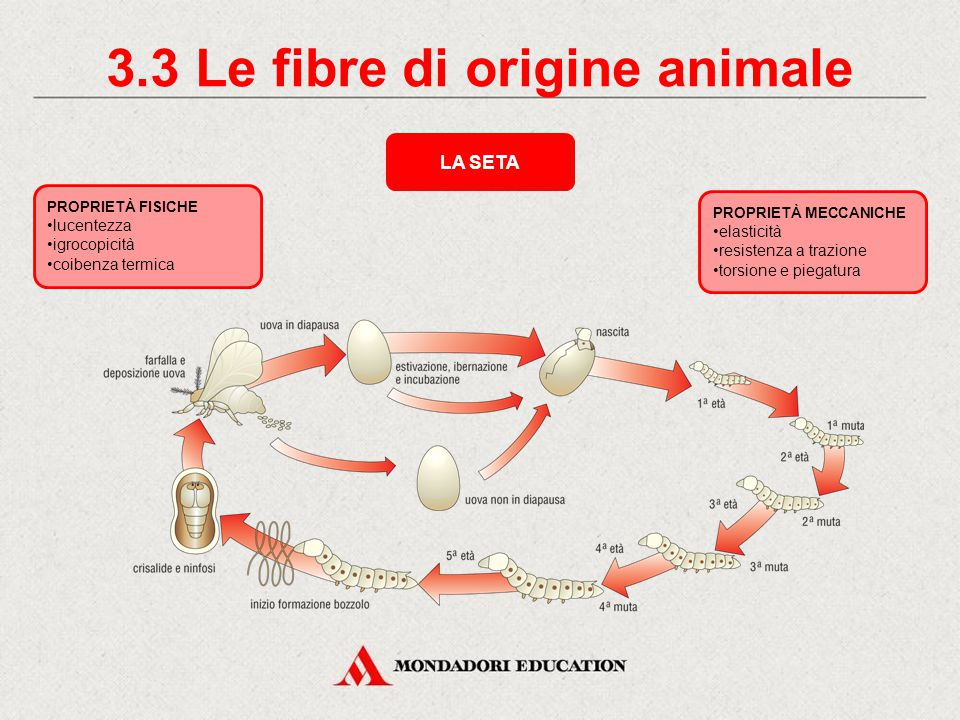 3.3 Le fibre di origine animale