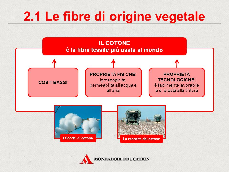 2.1 Le fibre di origine vegetale è la fibra tessile più usata al mondo