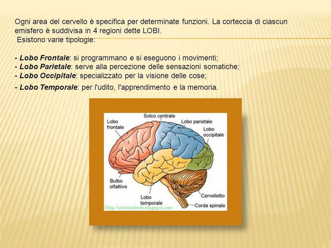 Ogni area del cervello è specifica per determinate funzioni