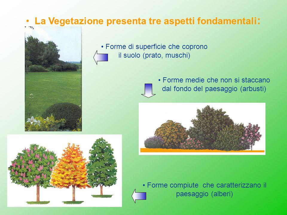 La Vegetazione presenta tre aspetti fondamentali: