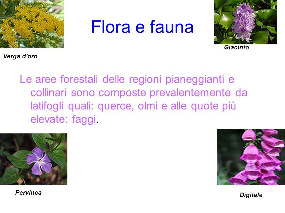 Flora e fauna Giacinto. Verga d oro.