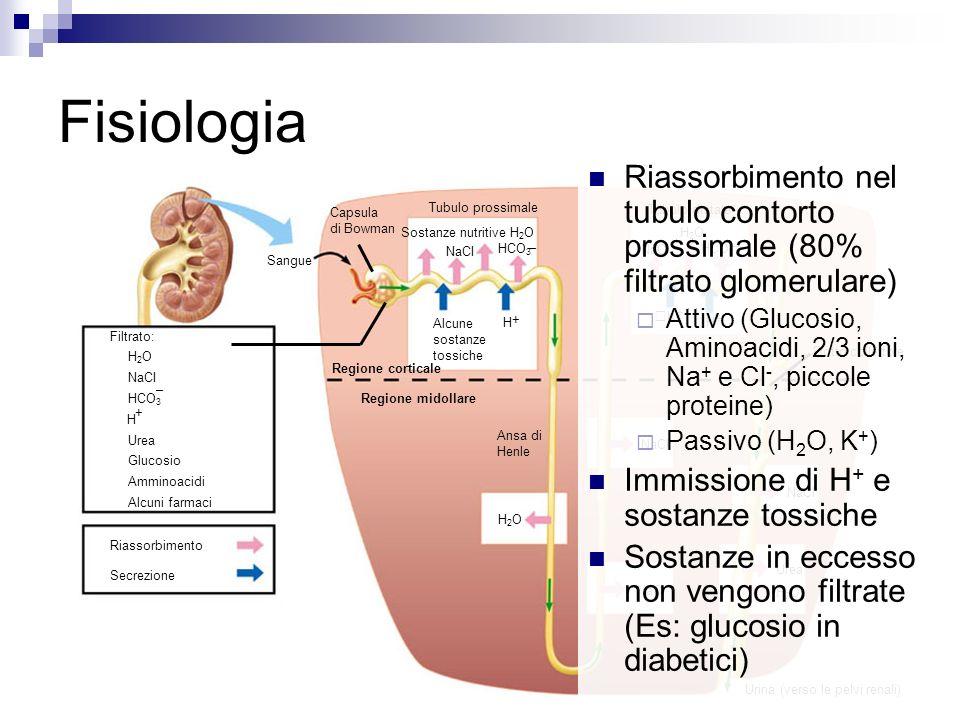Fisiologia Riassorbimento nel tubulo contorto prossimale (80% filtrato glomerulare)