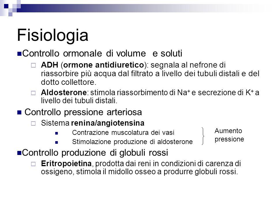 Fisiologia Controllo ormonale di volume e soluti