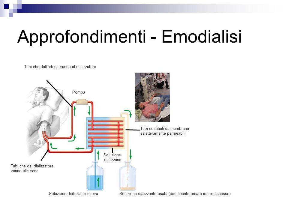 Approfondimenti - Emodialisi